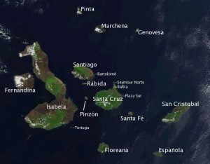 A satellite image of the Galápagos Islands in 2002. Almost all of the Galápagos penguins live along the western coasts of Isabela and Fernandina and two–thirds of the birds reside along the southwestern bulge of Isabela.  Credit: Imagery NASA, Imagery NASA, Labelled by Storpilot on Wikipedia