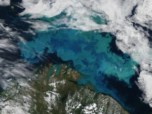 In a coccolithophore bloom, like this one in the Barents Sea, water turns brilliant shades of blue and green. Credit: Jeff Schmaltz/NASA Earth Observatory.