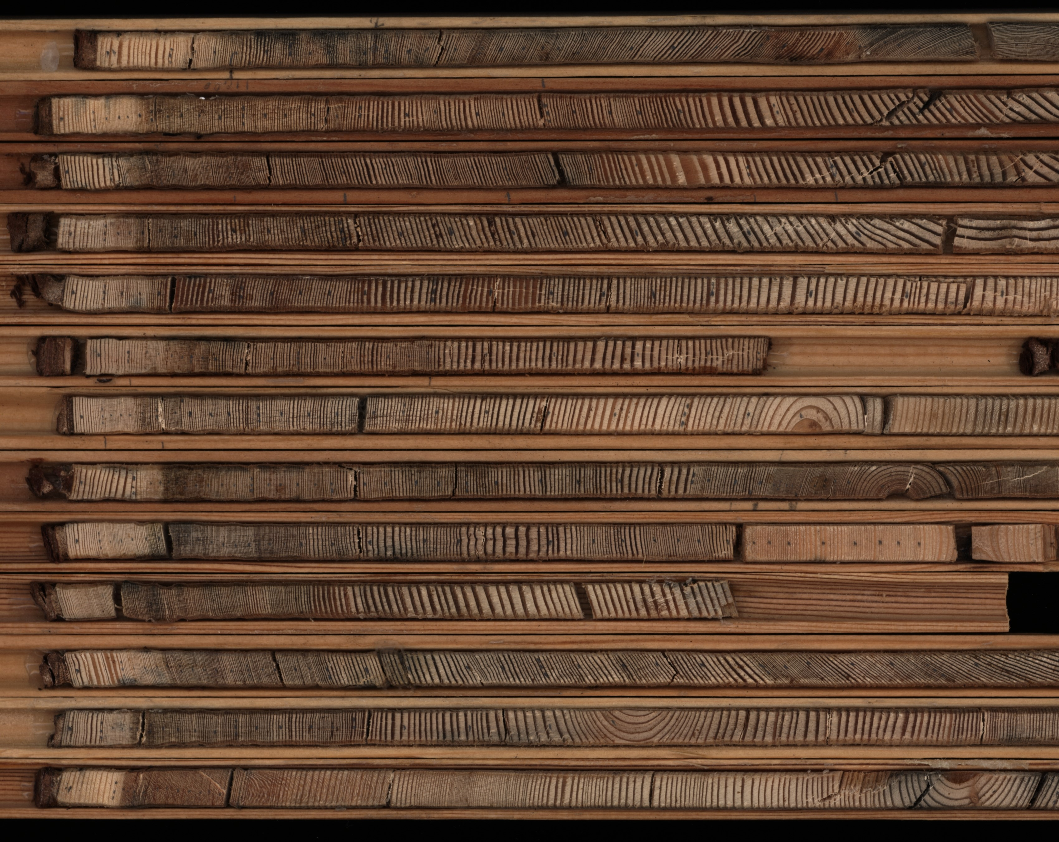 Tree rings collected from old-growth Dahurian larch trees. Trees grow one ring per year. Credit: Xianliang Zhang.