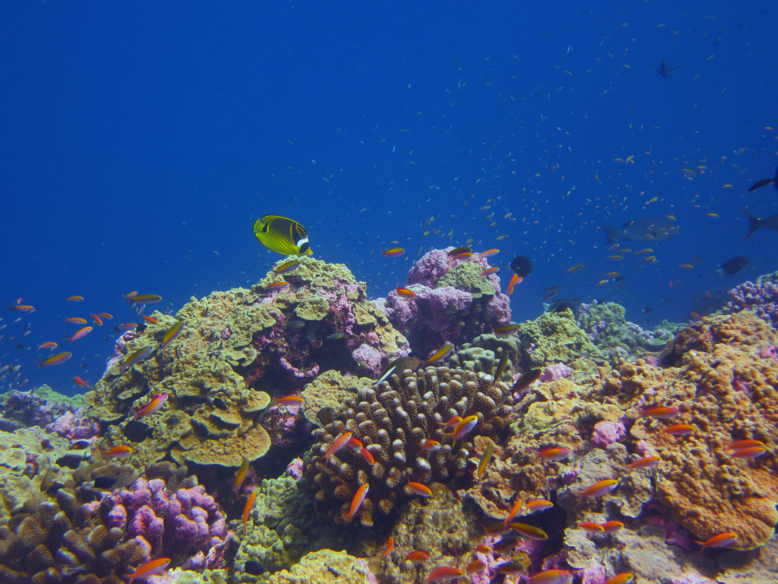 Underwater photograph of a healthy coral reef in the Phoenix Islands Protected Area.